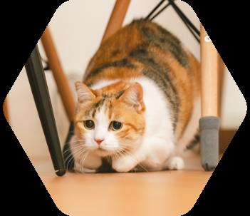 三毛猫 写真